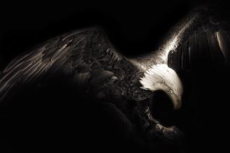 eagle-1260079_1280